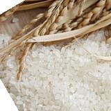 写真:米のり・にか