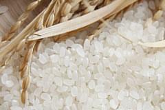 写真:米のり・にかわ